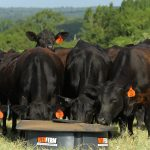 When Times Get Tough, Don't Stop Supplementing, Says BioZyme® Cattle Nutrition Expert