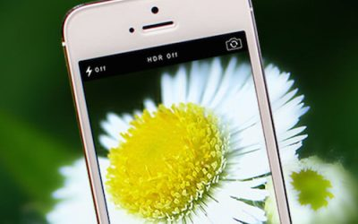 Free Garden App Identifies Plants from Photos