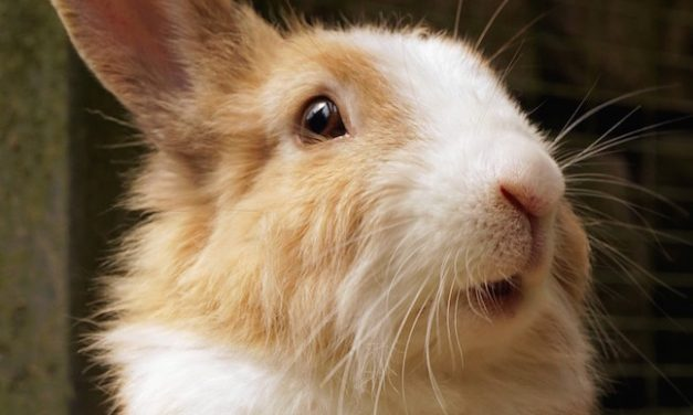 Rabbit Shows: An Amusing Tale Of Brutal Competition