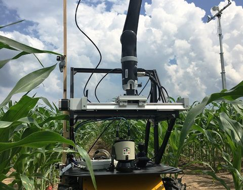 Growing Crops in Tough Conditions: Robot Duo Helps Scientists Develop Drought-Resistant Corn