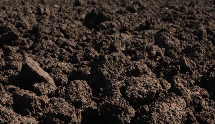 Today's Most Innovative Farmers Are Getting Down To Earth, Says Soil Scientist